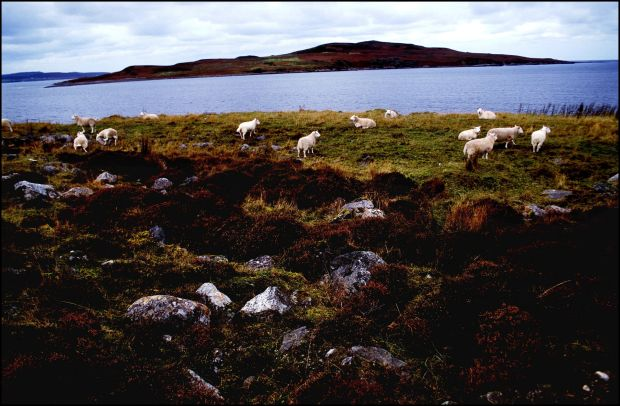 Guinard Island, Scotland, contaminated with Anthrax after a British government chemical weapons experiment