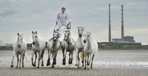 HORSIN' AROUND: Lorenzo, 'The Flying Frenchman', who will be performing twice daily at this year's Dublin Horse Show at the RDS, on Sandymount Strand, Dublin. Photograph: Dara Mac Donaill/The Irish Times