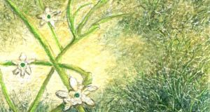 Michael Viney: Is starry stonewort a native species that knows its place?