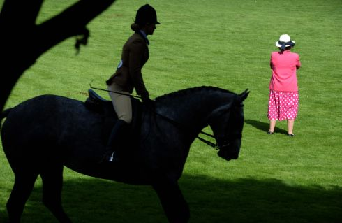 HORSE SHOW: Faith Ponsonby, RDS steward, at the Small Hunters class 21, judging in ring one, at the first day of the Dublin Horse Show at the RDS Dublin. Photograph: Dara Mac Donaill/The Irish Times