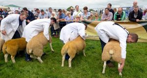 Sheep being judged at the 2016 Tullamore Show in Co Offaly. Photograph: Eric Luke