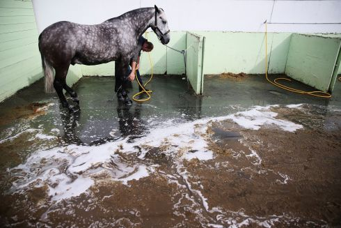 HORSE SHOW: A horse is washed down after competing at the Dublin Horse Show in the RDS. Photograph: Brian Lawless/PA Wire