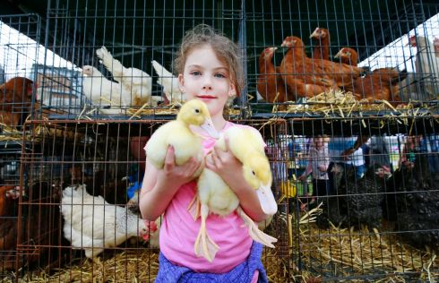 Megan Grant (10) of Slievardagh poultry with her Aylesbury ducklings at the Tullamore Show.  Photograph Nick Bradshaw