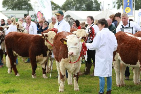 General View  from the Tullamore Show.  Photograph Nick Bradshaw