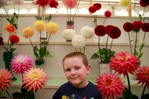 Tiernan Redmond (5) Ballykinler, Co Down amongst the Dahlias in the Horticulture display at the Tullamore Show.  Photograph Nick Bradshaw