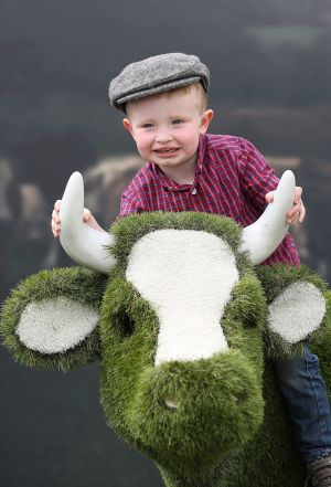 Sean Bagnal (2 and a half yrs) from Allenwood Co.Kildare on the AIB grass cow  at the Tullamore Show and AIB National Livestock Show.  Pic Julien Behal Photography