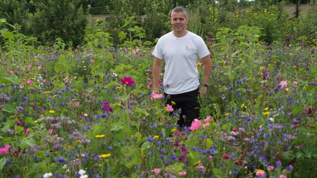 OPW gardener Brian Quinn standing in the middle of the pictorial, pollinator-friendly annual meadow sown in Ashtown walled garden earlier this summer. Photograph: Richard Johnston