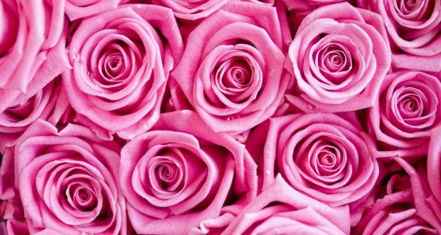 rosa vagina pic