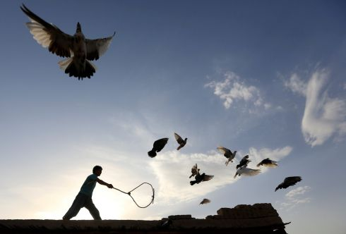 FOR THE BIRDS: A man wields a stick as his flock of domesticated pigeons fly above the roof of his house in Nangarhar Province, Afghanistan. Photograph: Parwiz/Reuters