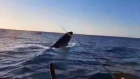 The reel deal: anglers 'hook' a humpback whale