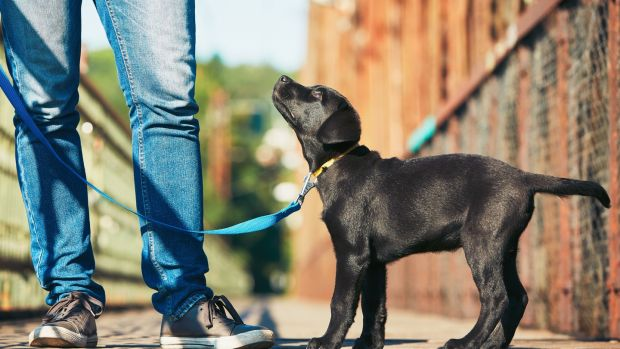 Walking the dog: one of the easiest ways to fitness is walking