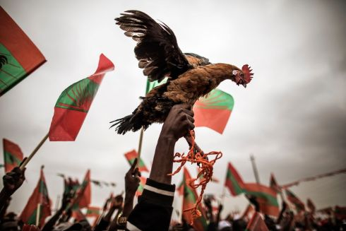 ANGOLA ELECTION: A supporter of Angolan presidential candidate Isaías Samakuva holds a rooster at the closing rally of Samakuva's campaign, in Luanda. Photograph: Marco Longari/AFP/Getty Images