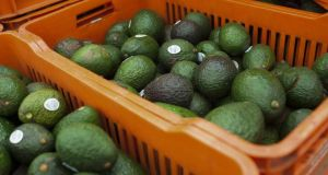The only avocados available in New Zealand are grown in the country, and in 2015 alone, an additional 96,000 New Zealand households began purchasing the fruit. Photograph: Brett Gundlock/Bloomberg via Getty Images