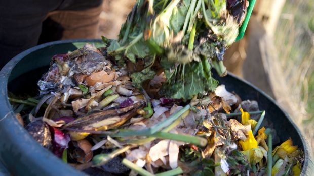 You can put your kitchen waste in a composting bin