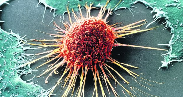 Image result for cancer cell