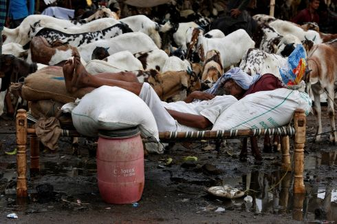 CONKED OUT: A trader sleeps among his goats at a livestock market ahead of the Eid al-Adha festival in Calcutta, India. Photograph: Rupak De Chowdhuri/Reuters