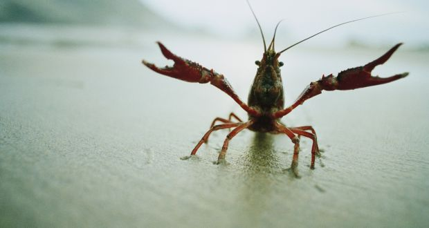 Water Users Urged To Take Precautions Against Spread Of Crayfish Plague