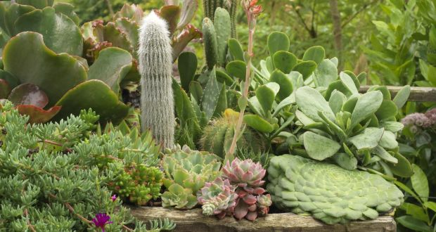 Indoors Or Outdoors Cactii Are Cool
