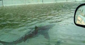 The same shark  swam down an identical freeway during Hurricanes Irene and Sandy