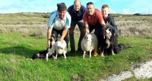 The rescued ewe and two lambs from Inishark with Chris Heneghan, Michael Murray, Peter Anthony Lacey and Thomas Lacey. Photograph: Marie Lacey