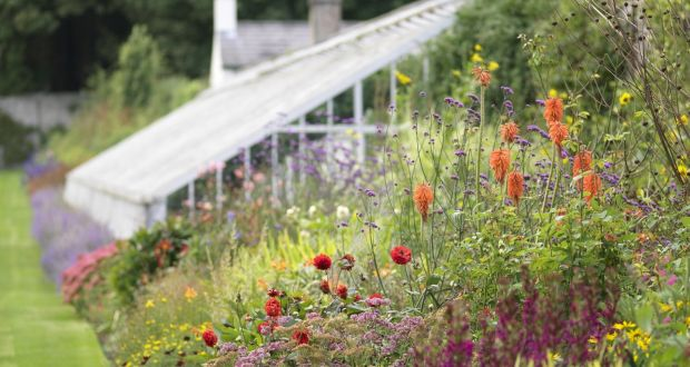 Six things to do in the garden in September