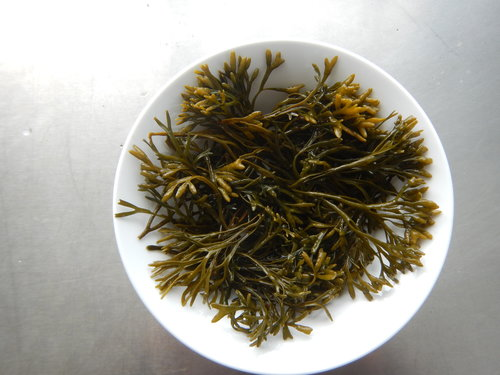 Channel wrack: A versatile, attractive seaweed rich in omega 3 fatty acids and great for cooking