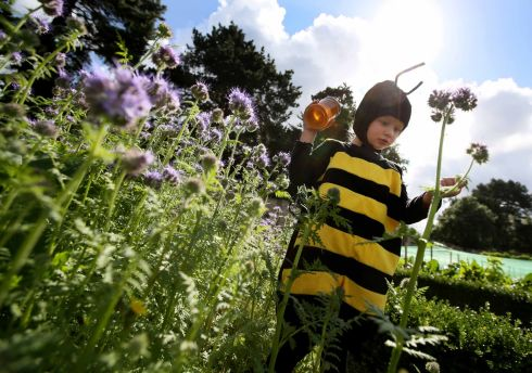 BUSY BEE: Siun Barry (3) from Sutton helps to launch the third annual Phoenix Park Honey Show which runs from 11am-5pm on Sunday. Photograph: Mark Stedman