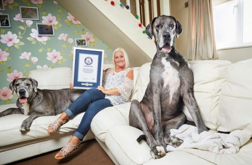 Freddy the tallest dog with his owner Clare Stoneman. Photograph: Paul Michael Hughes/GWR/PA Wire