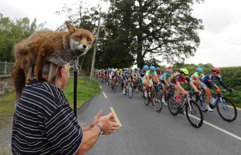 BY A WHISKER: Pat Gibbons and Gráinne the fox watch participants in the An Post Rás na mBan pass by at Castlecomer, Co Kilkenny. Photograph: Lorraine O'Sullivan