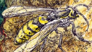 Wasps seem to follow population cycles of their own. Illustration: Michael Viney