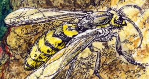 The wasps plundering resources for native ecosystems