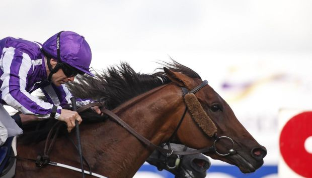 Hydrangea sprang a 20-1 surprise in the Coolmore Matron Stakes, beating her stable companion Winter by a head. Photograph: Alan Crowhurst/Getty Images