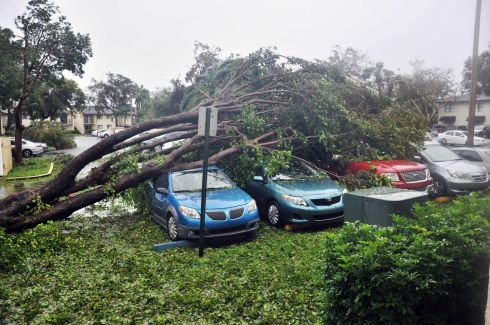 A fallen tree crashes atop a row of cars in Miami, Florida, in the wake of Hurricane Irma. Photograph: Michele Eve Sandberg/AFP/Getty Images