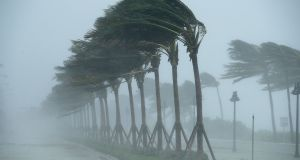 Trees bend in the tropical storm wind along in Fort Lauderdale, Florida. Photograph: Chip Somodevilla/Getty Images