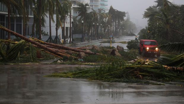 A vehicle passes downed palm trees as Hurricane Irma passed through Miami Beach, Florida on Sunday, September 10th as a Category 4 storm lashed the state with 130 mph winds. Photograph: Joe Raedle/Getty Images