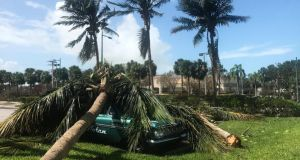 A palm tree lies on top of a 1959 Chevy in the wake of Hurricane Irma in Marco Island, Florida, US. Photograph: Brian Thevenot/Reuters