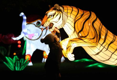 WILD LIGHTS: Pictured is Nina Kiernan (10), at the announcement that Dublin Zoo will this winter host a new event, Wild Lights.  Held after dark, it will feature giant colourful lanterns and illuminated animal sculptures, inspired by wildlife. See dublinzoo.ie. Photograph: Leon Farrell/Photocall Ireland