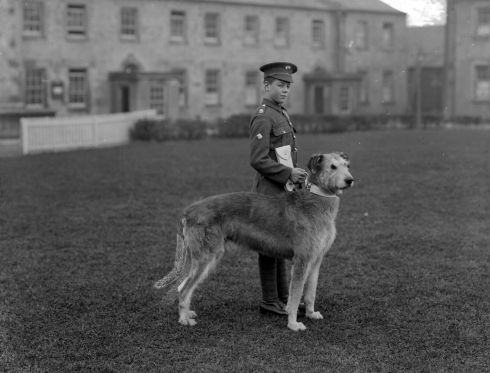 An Irish Guards Band drummer with a regimental mascot, Leitrim Boy, at the infantry barracks in Waterford. Photograph: Poole Photographic Studio