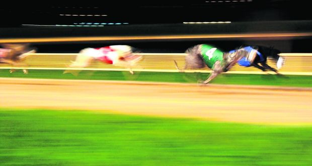 Champion greyhound tests positive for cocaine-like substance