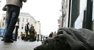 A dog outside a  shop on Dublin's Dame Street in Dublin. File photograph: Frank Miller