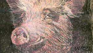 Animal welfare: pigs like edible, chewable, investigable and manipulable diversions. Illustration: Michael Viney