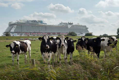 SEEN BETTER: A herd of cows appear to be unimpressed with the cruise ship 'World Dream' in Papenburg, northern Germany. Photograph: David Hicker/EPA