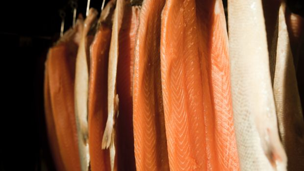Wild salmon hanging in a smokehouse