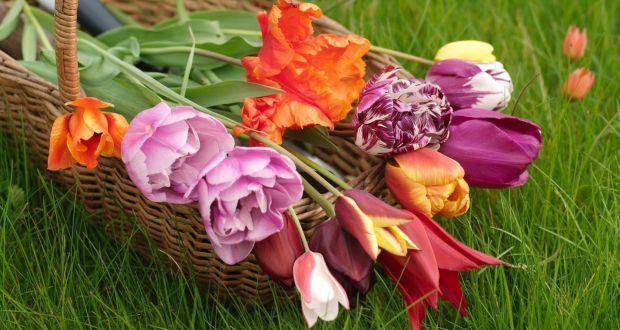 10 terrific tulips to buy now and plant later for spring a mixed basket of tulips from angela jupes garden photograph richard johnston mightylinksfo