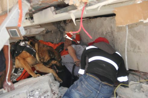 Rescue workers and a trained dog search for children trapped inside the collapsed Enrique Rebsamen school in the Coapa area of Tlalpan, Mexico City, Tuesday, Sept. 19tgh.   Photograph: Carlos Cisneros / Reuters