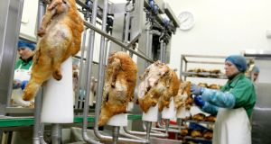Poultry being prepared and packed ready for export. Photograph: David Sleator