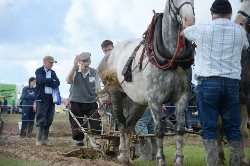 Edward Dowse, who is 85 and from Wicklow, competing in the special horse class on the third and final day of the National Ploughing Championships 2017, in Screggan, near Tullamore in Co Offaly.  All photographs: Alan Betson/The Irish Times