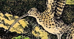 Threat of extinction: curlews were on the official Irish list of birds on offer to shooters until 2012. Illustration: Michael Viney