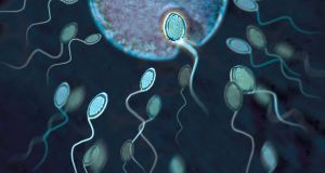 A more accurate read is now possible on declining sperm counts. Photograph shows the beginning of fertilisation as a single sperm combines with an ovum