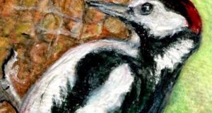 The great-spotted woodpecker. Illustration: Michael Viney
